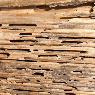 Termites can do extensive damage to your home.