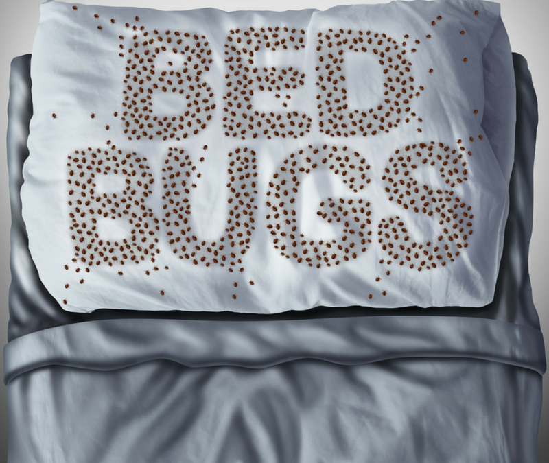 Signs you have bed bugs