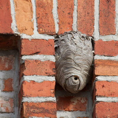 Watch out for insects that could build nests on the side of the house.