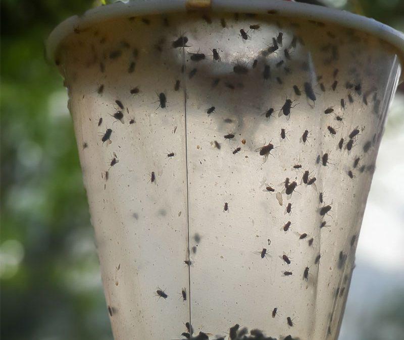 DIY bug traps