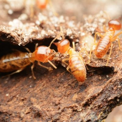 Professional protection against termite damage in Fort Mill SC