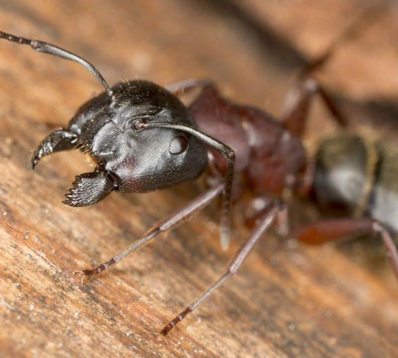 Don't move into a pest infested new home, real estate pest control will help you avoid this here in South Carolina.