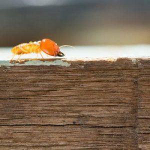 Check your beams and foundation for termite activity in your real estate pest control checks here in South Carolina.