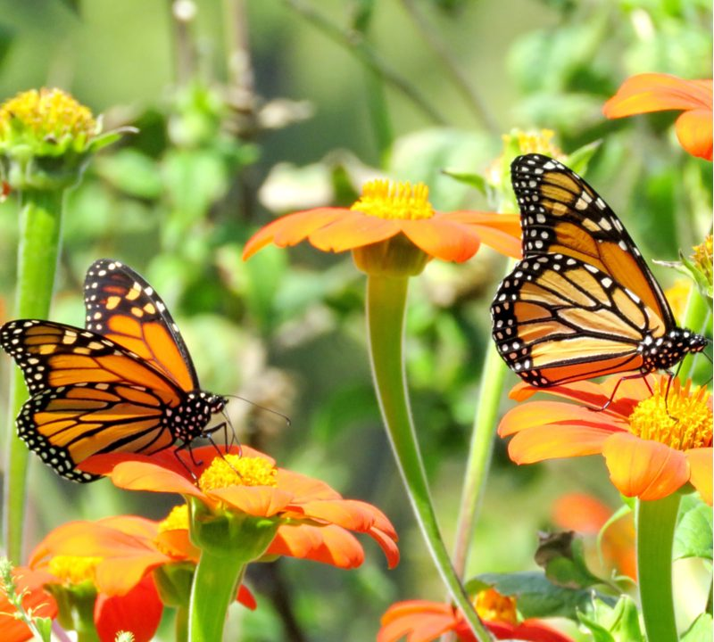 Our guide to attracting pollinators will help you bring beautiful butterflies and beneficial bees to your Monroe, NC garden.