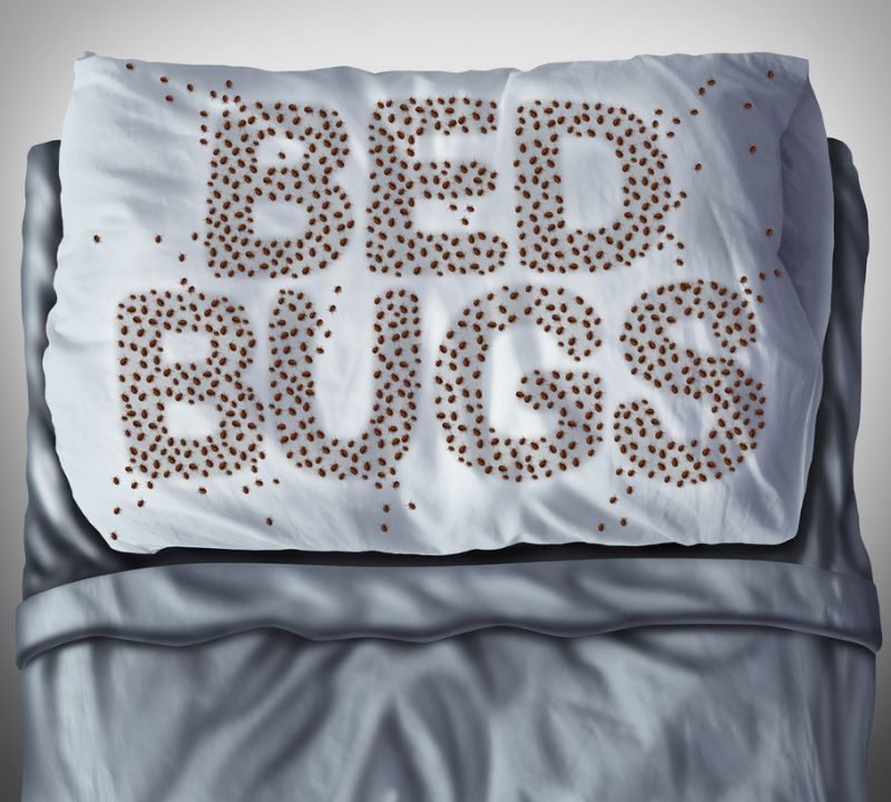 Bed bug control will help you keep a disgusting bed bug infestation out of your Charlotte, NC home.