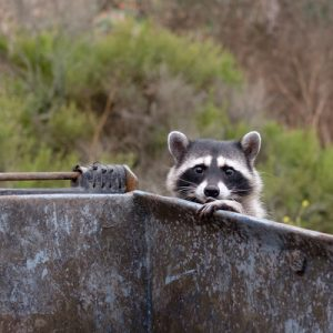 A key commercial pest control tip is to keep your dumpster closed up at night here in Gastonia, NC.