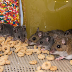 Properly sealing your food is a great fall pest control method to keep mice out of your pantry this fall and winter.