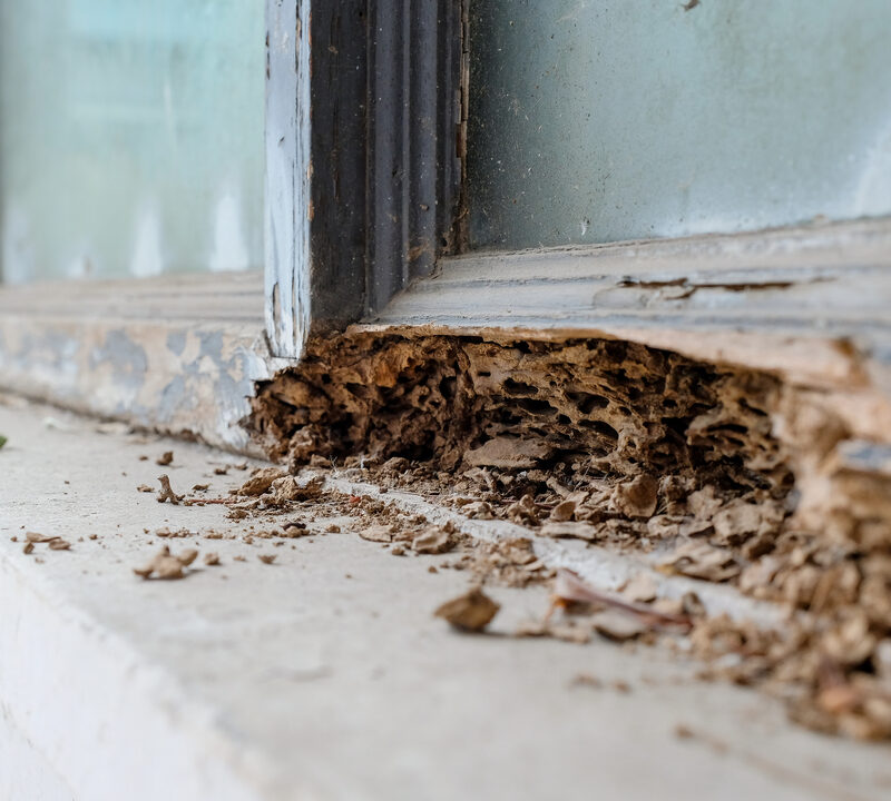 Because of the terrible and extensive damage that they can do, termites are some of the worst pests to find in your North Carolina or South Carolina home.