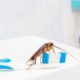 With spring lawn care services from Cramer Pest Control, you can keep cockroaches off of your toothbrush and out of your home.
