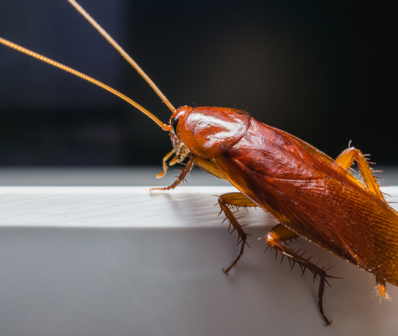 cockroach on a white ledge