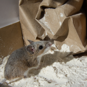 mouse chewing bag of flour