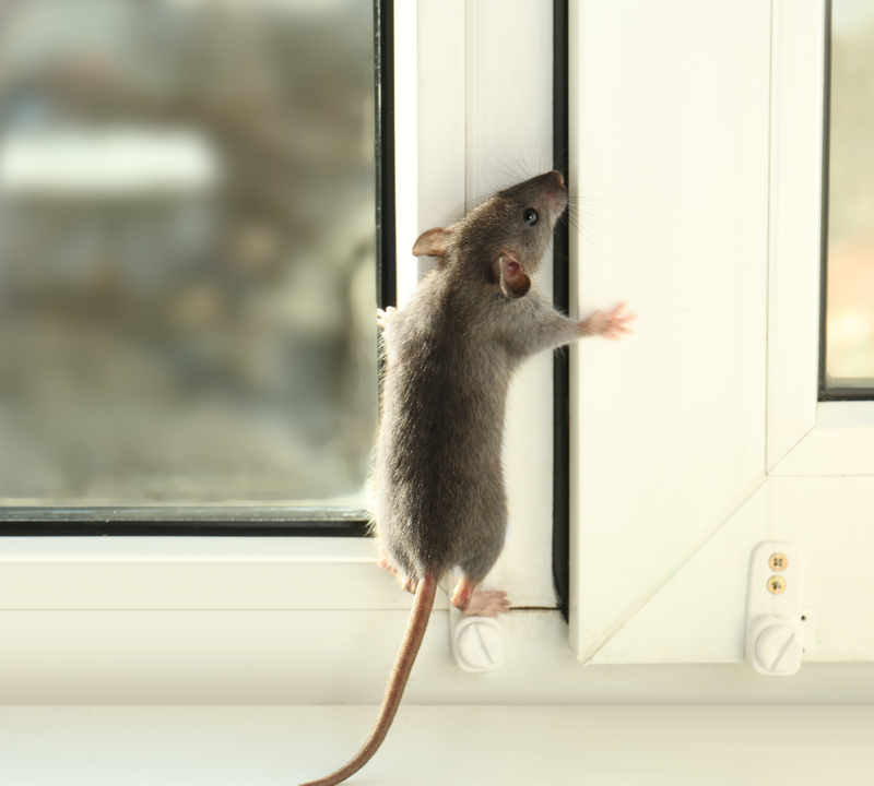 mouse on window