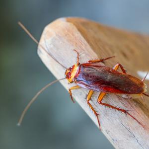 cockroach on a log