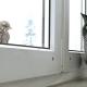 cat watch bird